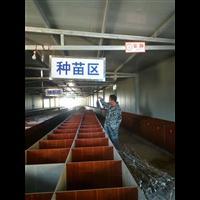 竹鼠销售#竹鼠供应#贵州竹鼠