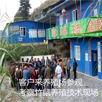 贵州竹鼠养殖场、客户考察现场