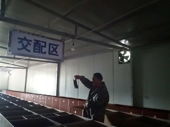 贵州竹鼠养殖