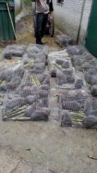 英德竹鼠۞英德竹鼠种苗15766555522